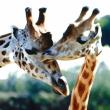 BRANFERE : PARC ANIMALIER ET BOTANIQUE + PARCABOUT