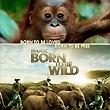 Festival Born To Be Wild - Nés pour être Libres
