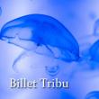 """EXCLU WEB - BILLET """"TRIBU 2017"""""""